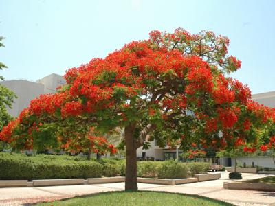העץ הנדיב. תל אביב (צ' - דוברות)