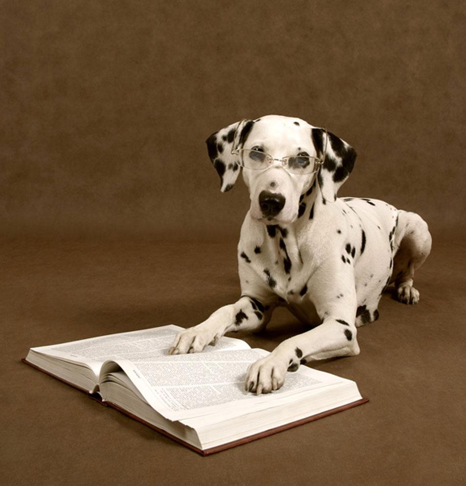מקצוע מאלף. אילוף כלבים (צ' - shutterstock)