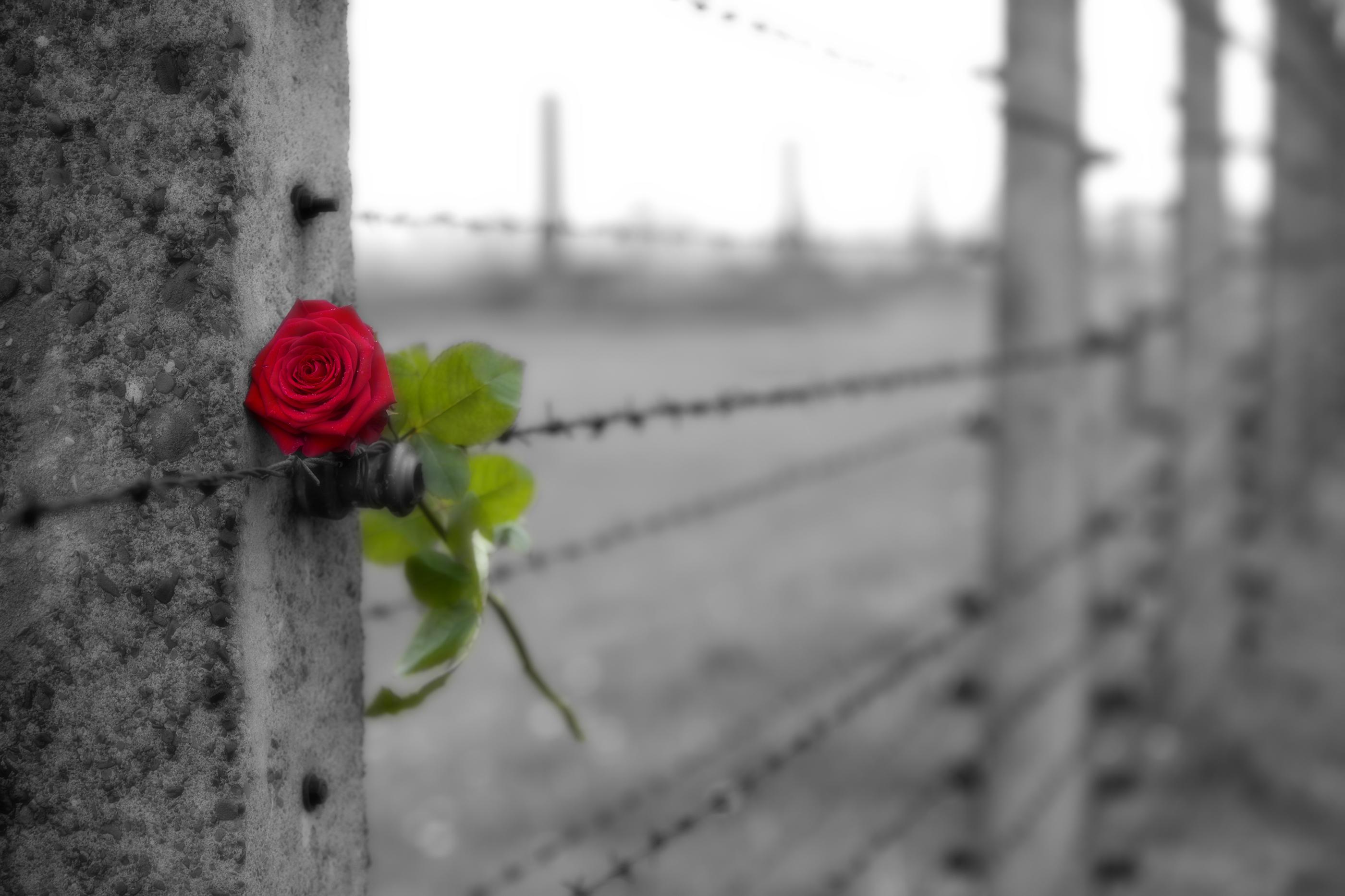 כי גם ביום השואה, תרומה קטנה של קהל הסטודנטים יכולה לעזור (צ'-shutterstock)