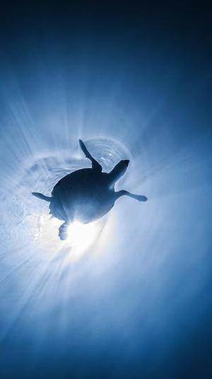 צב ים. עמרי עומסי רשות הטבע והגנים, רשות הטבע והגנים