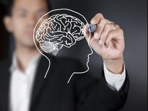 עובדות על המוח. ShutterStock