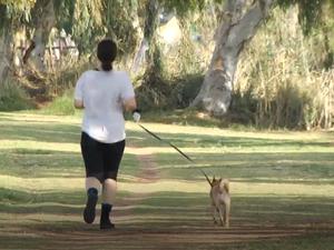 טיפים לטיול עם הכלב. מערכת וואלה!, צילום מסך