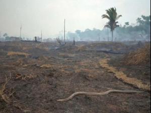 בווידאו: שיא של שלוש שנים: 6,803 שריפות פרצו ביער הגשם בחודש יולי השנה. רויטרס