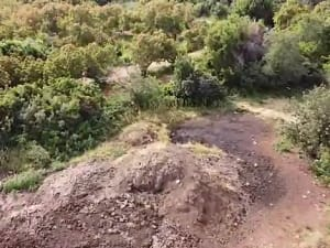 מכת זבובים ברחבי הארץ בעקבות החום הכבד ומפגעים חקלאיים 4.8.20. המשרד לאיכות הסביבה, אתר רשמי