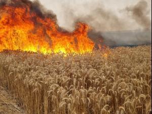 שריפה פרצה בשדה חיטה במועצה האזורית שדות נגב בעקבות נפילת בלון תבערה 9.5.241. מועצה אזורית שדות נגב, באדיבות המצולמים