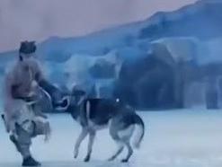 זאבים תוקפים שחקנים בהצגה. WEIBO, צילום מסך