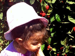 קטיף פירות יער בבוסתן בראשית בעין זיוון. תיירות עין זיוון,