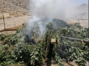 תיעוד: איתור חממת סמים בערבה, נחיתה ממסוק והשמדת החממה 28.7.21. דוברות משטרת ישראל