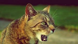 בית ארז-חוות מילטין-אייטם 14: כדור מסוכן: כיצד תעזרו לחתול שלכם להיפטר מכדורי הפרווה?. Family guide