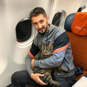 הגניב לטיסה את החתול הענקי שלו, וזה העונש שקיבל מחברת התעופה