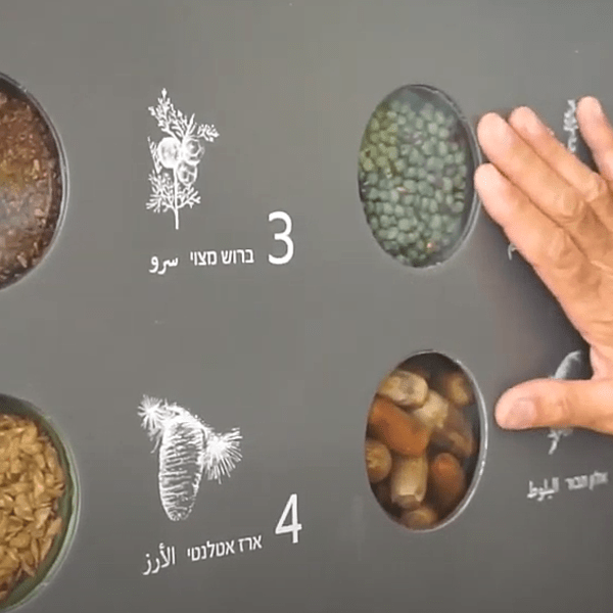 """זרעים קק""""ל. קק""""ל, צילום מסך"""