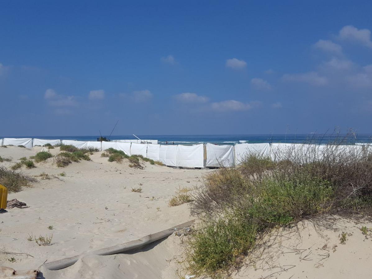 בעקבות הפרסום בוואלה! NEWS: מסיבת החוף שסיכנה את צבי הים בוטלה