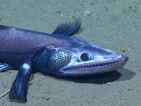 מדג רפאים ועד עכביש הים הכתום: נחשפו יצורים ימיים חדשים וביזאריים