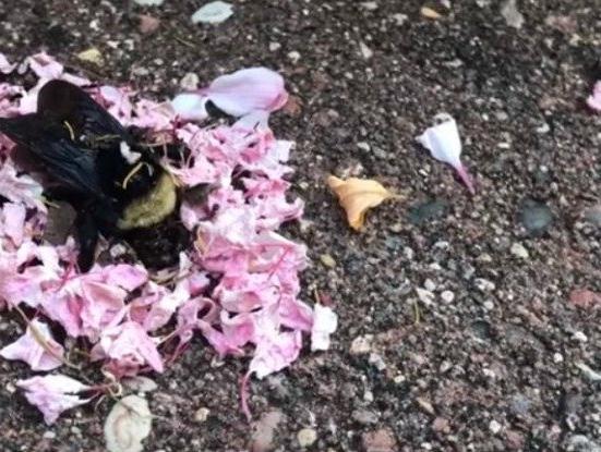 התיעוד שהדהים את העולם: האם הנמלים ערכו טקס הלוויה לדבורה מתה?