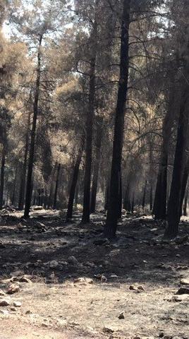 """השריפה ביער מורדות הרי נצרת. יונתן סימנה, ארכיון הצילומים קק""""ל"""