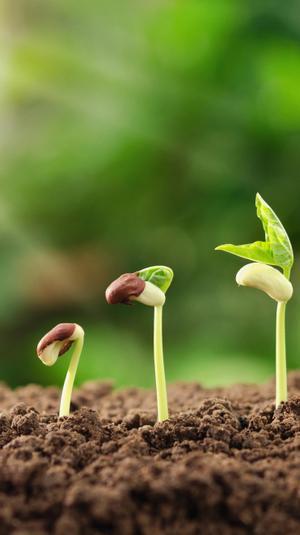 """זרעים קק""""ל. ShutterStock"""