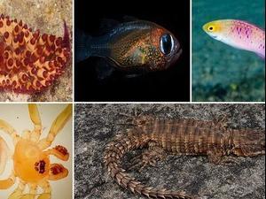 מינים חדשים של בעלי חיים שהתגלו ב-2019