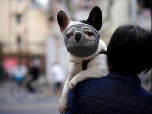 כלב עם מסיכת פנים בשנגחאי, סין - ה-22 למרץ 2020