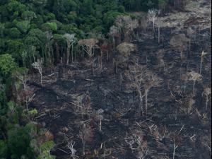 שריפות באמזונס בברזיל, 10 ביולי 2020