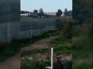 לכלבת אין גבולות: כלבים ותן חוצים את הגבול בין ישראל ולבנון  19.8.20