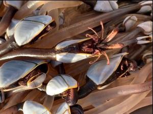 יצורים ימיים מוזרים שנמצאו בחוף