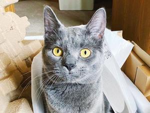 חתול לבד בבית. tiktok.com/@glennthebabycat, צילום מסך