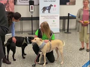 פיילוט בשדה התעופה של פינלנד: כלבי גישוש מאתרים חולי קורונה 24.9.20