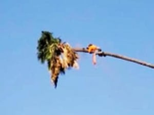 אדם כורת עץ ונתקע עליו