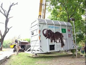 """אחרי שנים של מאבק: """"הפיל הבודד בעולם"""" הועבר מפקיסטן לקמבודיה  30.11.20"""