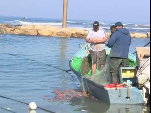 דיג הלוקוסים יוגבל בחופי ישראל, והדייגים מתכוננים למלחמה על פרנסתם  15.2.21. שלומי גבאי