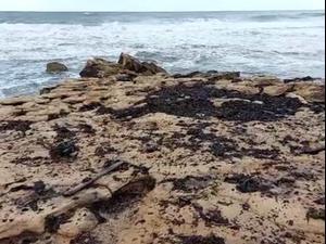 מהצפון ועד הדרום: כמויות גדולות של זפת נפלטו לחופי ישראל  18.2.21. המשרד להגנת הסביבה, אתר רשמי