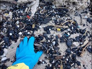 מתנדבים מנקים זפת מחוף בגן הלאומי חוף השרון. דפנה בן נון, רשות הטבע והגנים