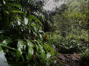 סרטון זווית מכירת יערות גשם בפייסבוק. זווית,