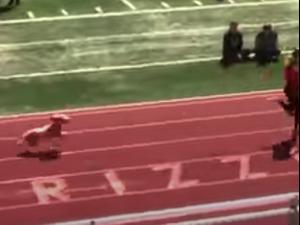 כלבה מפריעה למירוץ בארצות הברית. מתוך טוויטר, צילום מסך