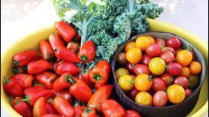 ירקות מהערבה התיכונה