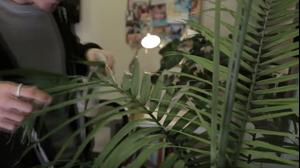 סרטון זווית משרד ירוק