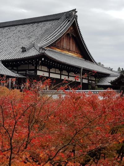 שלכת במקדש Tōfuku-ji שבקיוטו, יפן