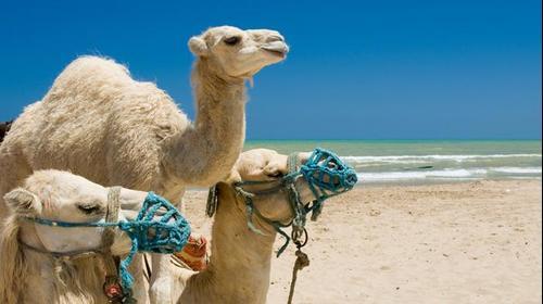 חוף באלג'יריה