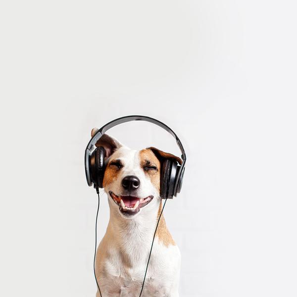 מוזיקה בלו נאן
