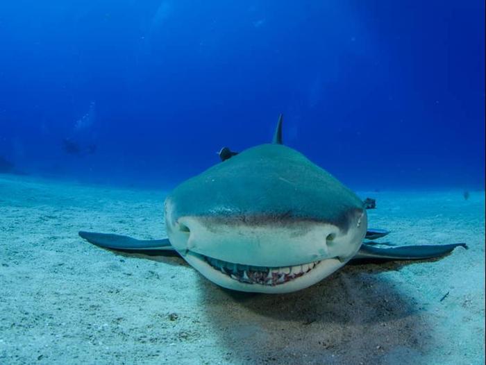 Sharks (Walla News)