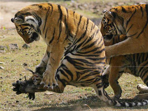 מתוחכם למען זכויות בעלי חיים: סין סגרה 7 גני חיות - וואלה! חדשות SJ-09