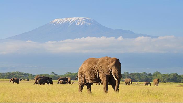 הר הקילימנג'רו בטנזניה. Shutterstock, ShutterStock