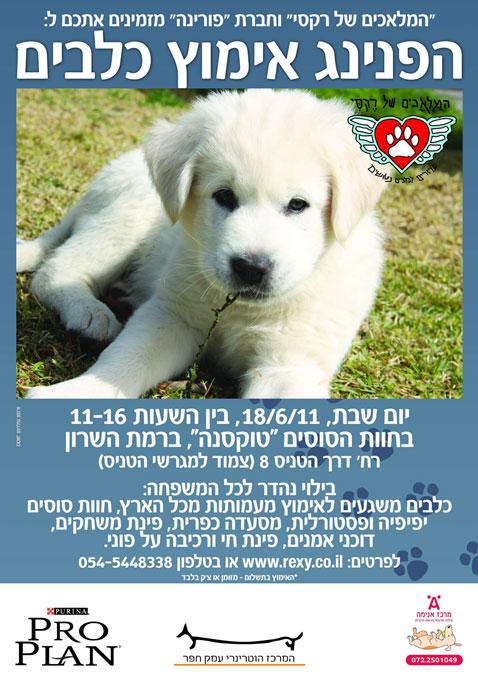 כולם חדשים יום אימוץ כלבים משותף לעמותות מכל הארץ, שבת, 18 יוני - וואלה! חדשות ON-08