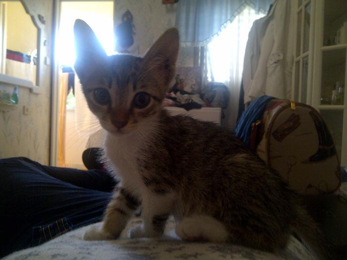 ניס חתולים: מה לעשות, צעד אחר צעד, אם מצאתם חתול - וואלה! חדשות HI-93
