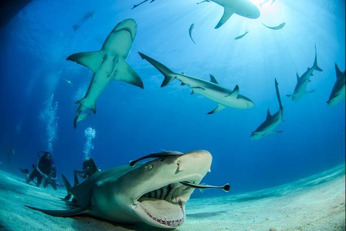 Des requins pris par Itzik Yogev, un passionné de requins mordu par un requin (avec la permission des photographes)