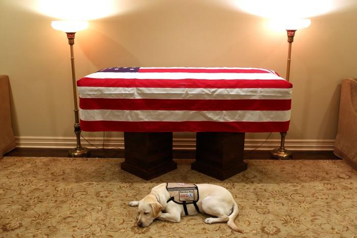 """סאלי, הכלב של נשיא ארה""""ב לשעבר ג'ורג' בוש האב, ליד ארונו, 1 בדצמבר 2018 (מערכת וואלה! NEWS)"""