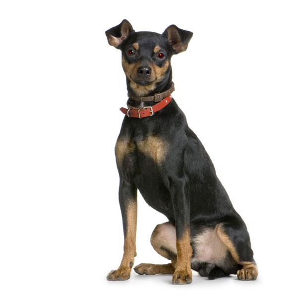 מגה וברק פינת האילוף: איך מחנכים כלב להבין מי פה בעל הבית? - וואלה! חדשות QO-53