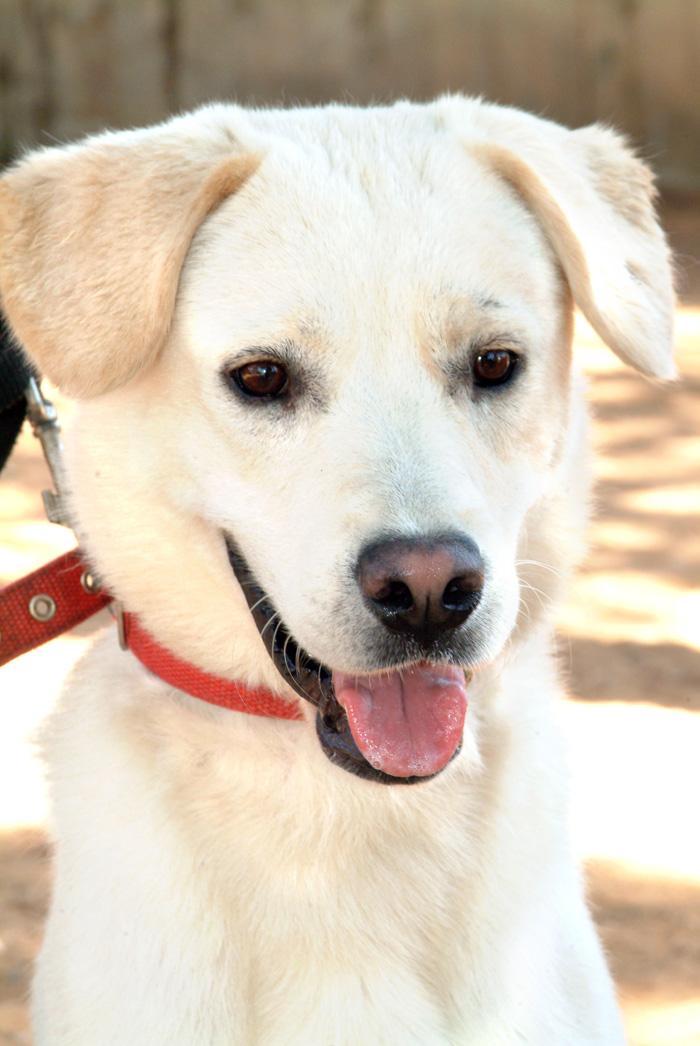 מעולה  ביום שבת יתקיים יום אימוץ כלבים מאולפים במושב בורגתה - וואלה! חדשות OE-16