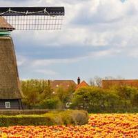 המדריך המלא להולנד (ShutterStock)